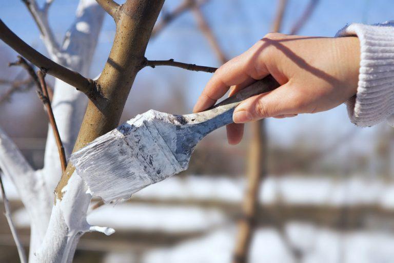 Ako predísť glejotoku a mŕtvici stromov