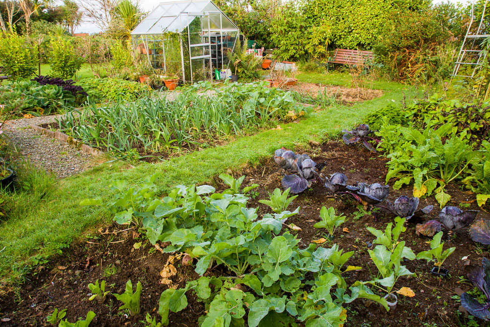 Ako sa postarať o plodovú zeleninu počas leta