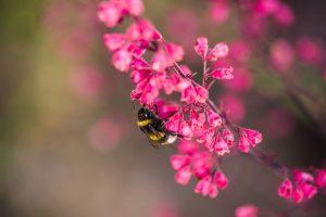 Kvety leta, ktoré nemôžete prehliadnuť