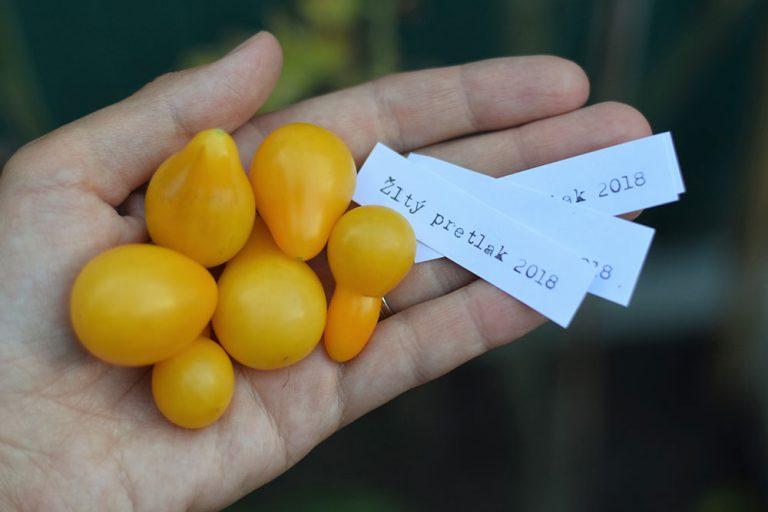 Najjednoduchší recept na veľa žltých rajčín