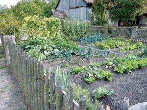 Sezóna zberu zeleniny je tu