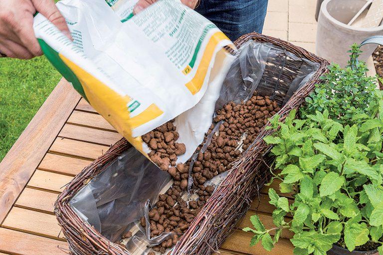 Výsadba byliniek do nádoby
