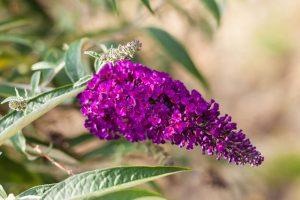 Vyberte si do záhrady tie najkrajšie kvety leta