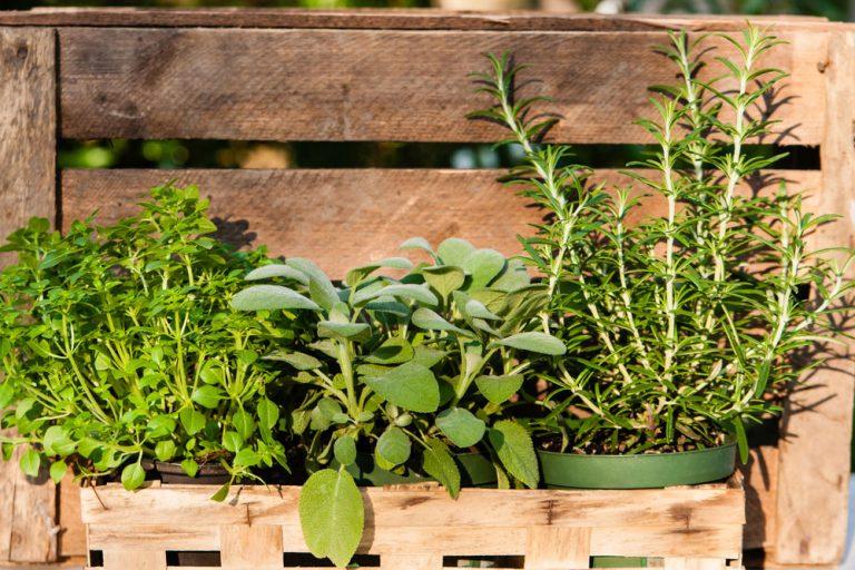 Ako pestovať bylinky v malej záhrade