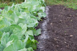 Ako využiť popol v záhrade
