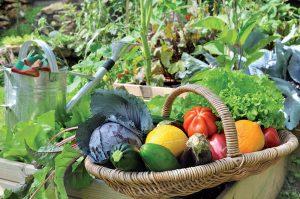 Ako predĺžiť sezónu na zber zeleniny