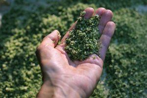 Objavte zelenú soľ. Má bohatšie zloženie ako himalájska!