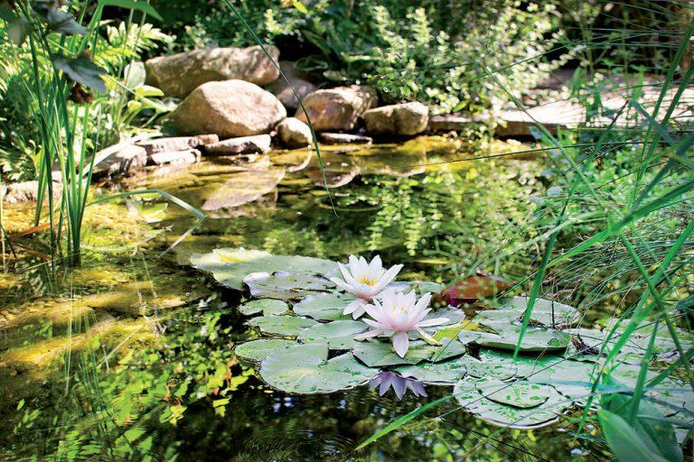 Inšpiratívna návšteva: Záhrada s prírodným jazierkom