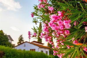 5 rastlín pre domácu dovolenkovú atmosféru