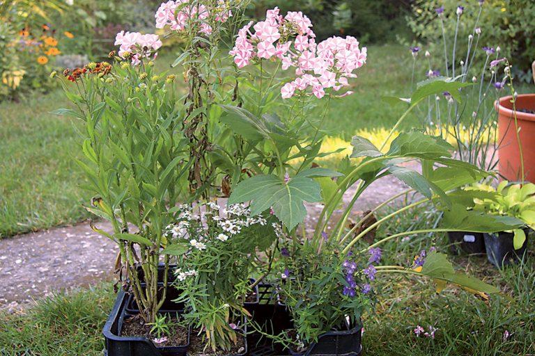 Výsadba kvetín