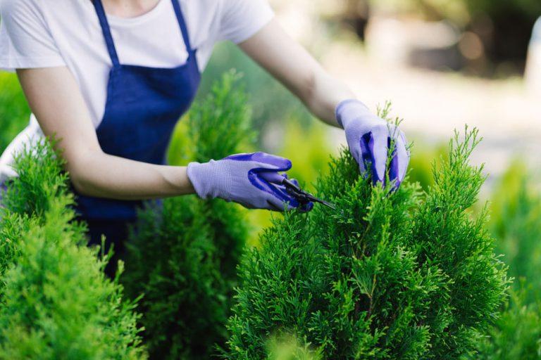 Jesenný manuál rezu okrasných drevín: Dostaňte ich do sviežej formy