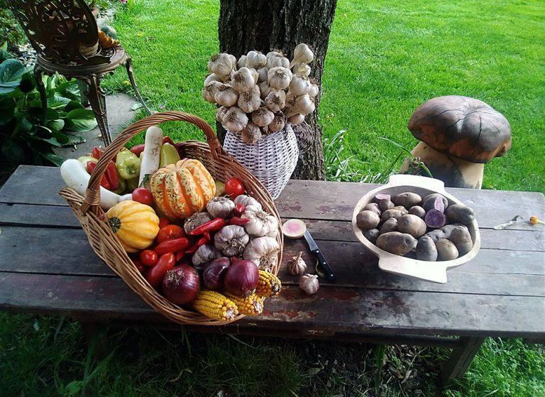 Poznáte kormošky? Záhradkári z východu pestujú pôvodné odrody i exotické ovocie