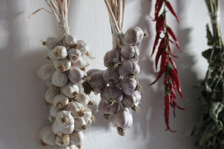 Zdravý cesnak: Prečítajte si všetky dôležité rady na jeho úspešné pestovanie