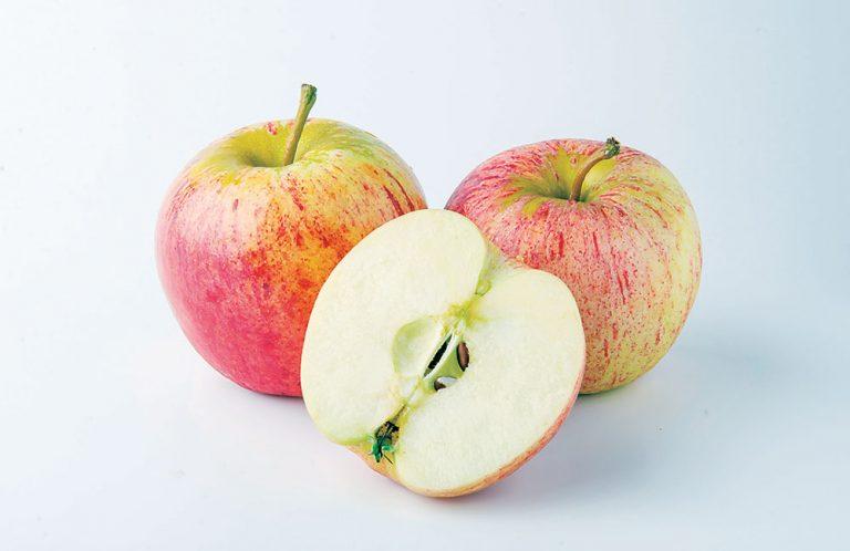 Jabloň Mango