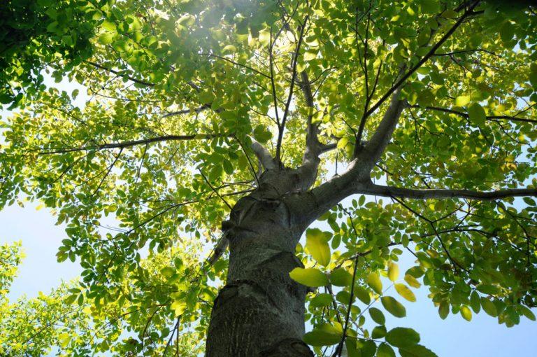 Čo sa dá pestovať pod orechom?