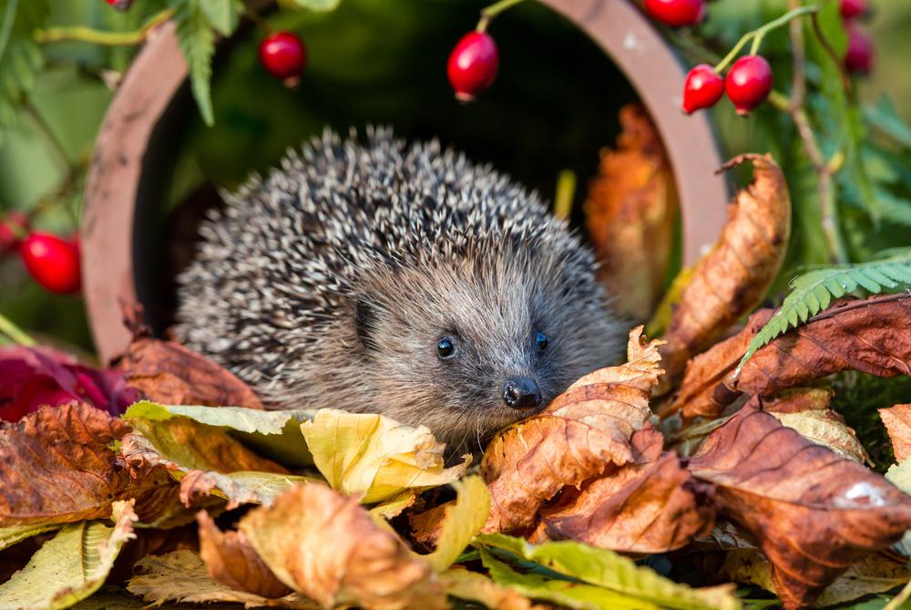 13 krokov k novému domčeku pre ježka a rady, ako sa o neho postarať