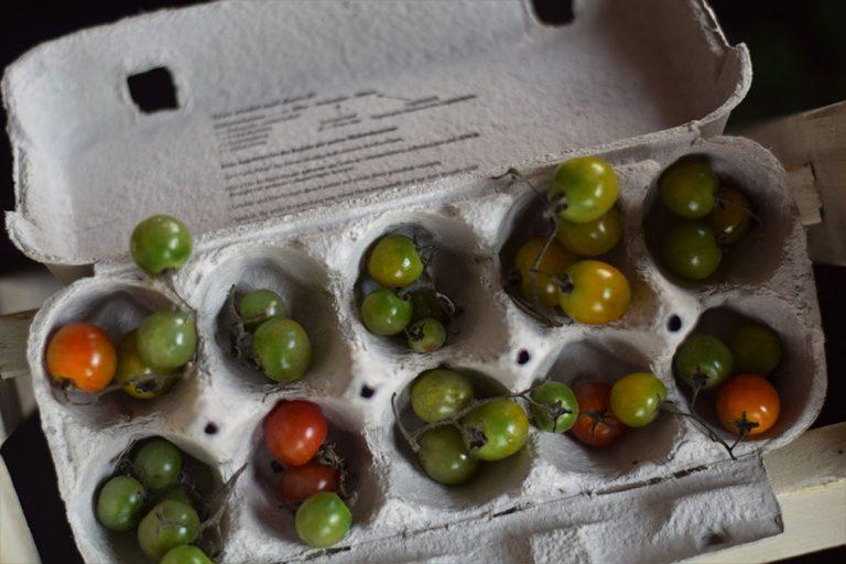 Test: Ktorý spôsob na dozrievanie rajčín dopadol najlepšie?