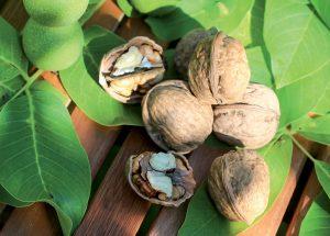 Pri kúpe orecha sa neunáhlite, výber odrody si dôkladne premyslite