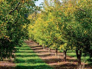 10 rád ako pomôcť ovocným drevinám, aby prežili zimu