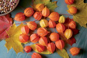 Machovka má viac vitamínu C ako citrón a obsahom výživových látok predčí aj goji