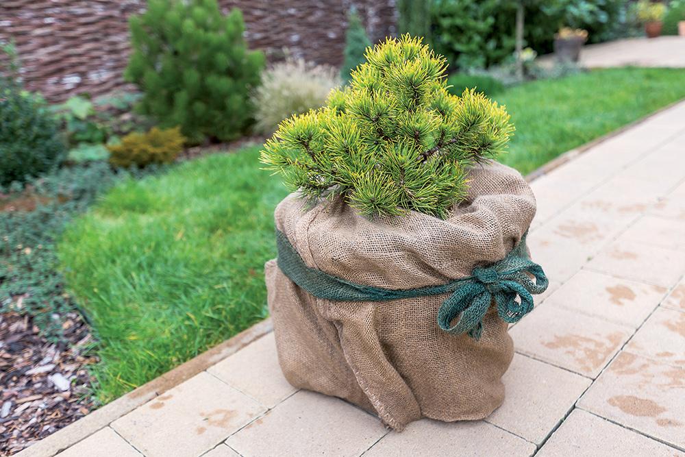 Ako sa počas zimy postarať o rastliny v nádobách