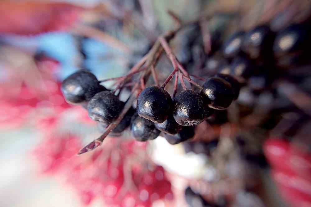 Nový ovocný druh do svojej záhrady? Vyberte si z menej známych ovocnín
