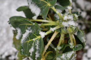 Kráľ zimnej záhrady! Odľahčite kelom sviatočný jedálniček