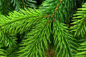 Nemáte ešte vianočný stromček? Objednajte si ho cez internet!