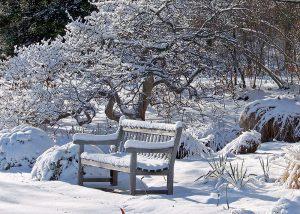 Sneh rastliny chráni. Ak ho niet, o ochranu sa musíme postarať my