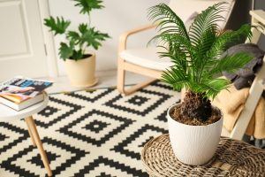 Ako sa správne postarať o interiérové palmy v zime