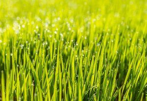 Novinka, trávnikové hnojivo Expert Start Plus