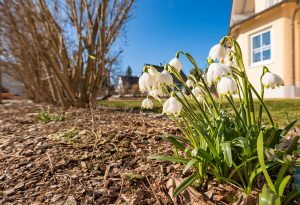 Lunárny kalendár pre záhradkárov - marec 2019