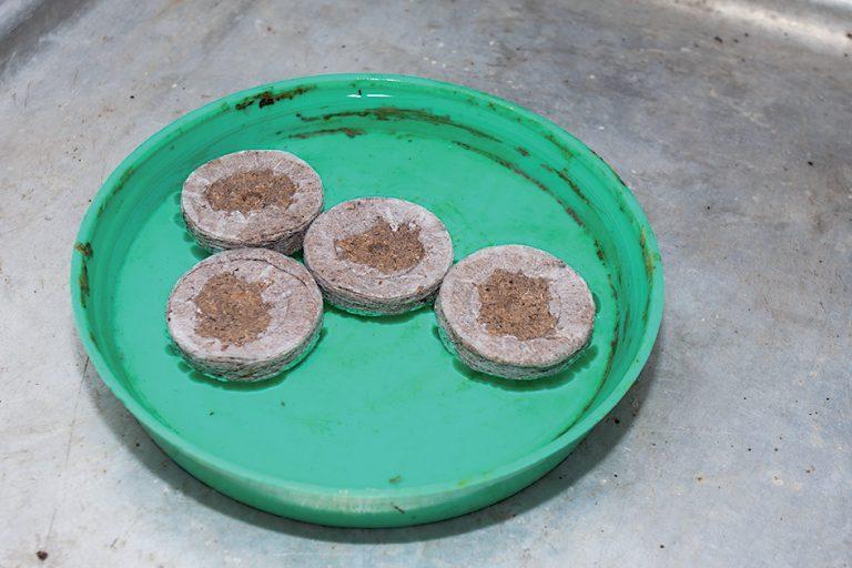 Rašelinové tablety
