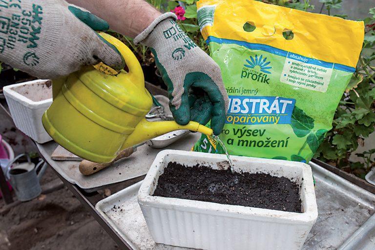 Dezinfekcia proti padaniu klíčnych rastlín