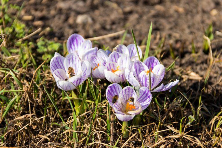 Kalendár záhradkára: Marec v záhrade