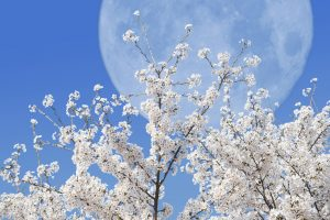 Lunárny kalendár pre záhradkárov - apríl 2019