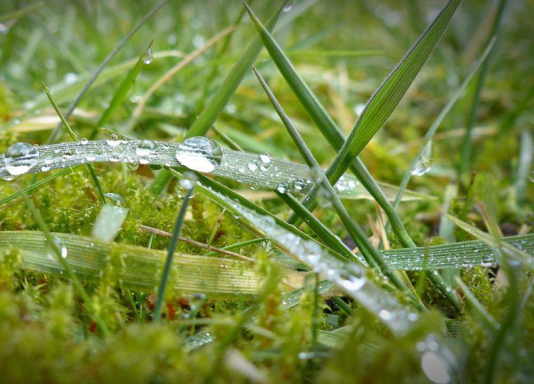 Čo s machom v trávniku, ktorý sa objavil po zime?