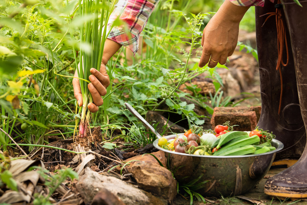 Poznáte tajomstvo bohatej úrody? Vysádzajte zeleninu v týchto správnych kombináciách!