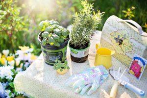 Aké bylinky v záhrade obľubujete? Tieto sú najobľúbenejšie