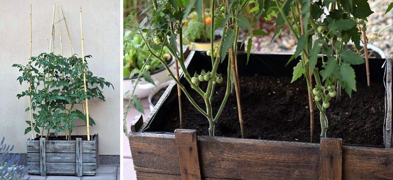 Na úspechy v pestovaní nepotrebujete záhradu. Takto budete žať úrodu aj bez nej! Na úspechy v pestovaní nepotrebujete záhradu. Takto budete žať úrodu aj bez nej!