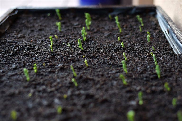 Na úspechy v pestovaní nepotrebujete záhradu. Takto budete žať úrodu aj bez nej!