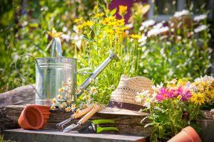 V čom tkvie tajomstvo zdravých a prosperujúcich rastlín? Vysaďte ich na správne stanovište!