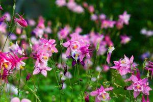 Záhrada verzus balkón: Vyberáme nové rastliny