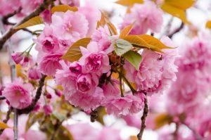Najkrajšie rastliny apríla: Nechýbajú vo vašej záhrade?