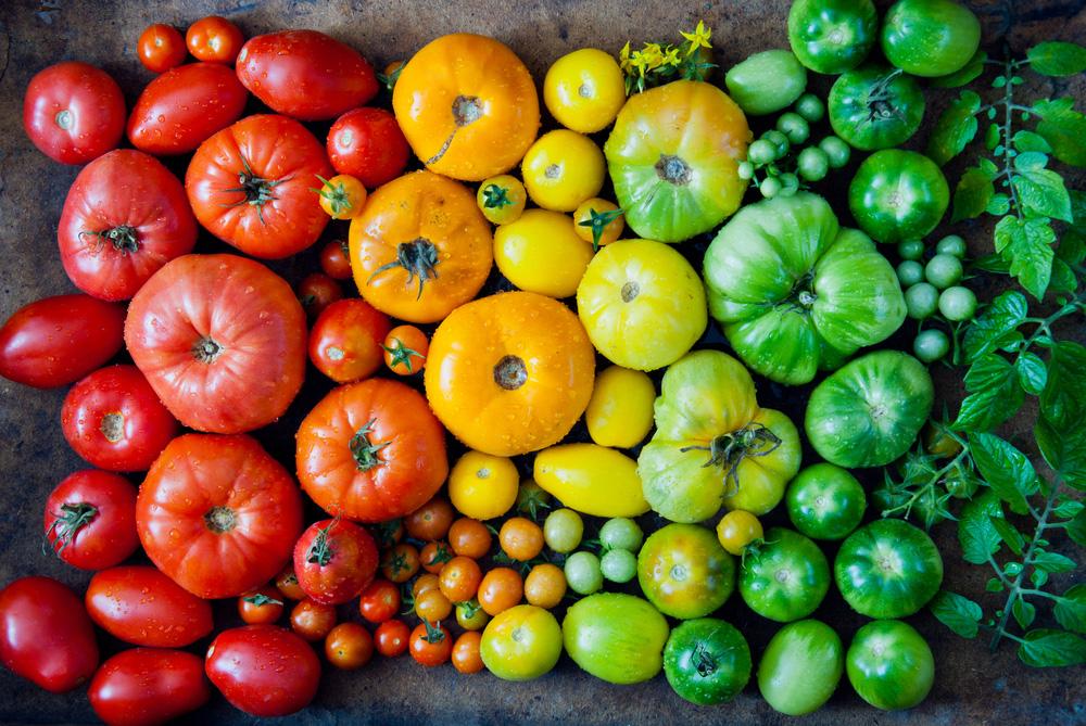 4 kroky k zdravým rajčinám z vlastnej úrody