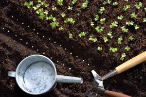 Ako úspešne zvládnuť jarné výsevy a neskôr sa tešiť z úrody