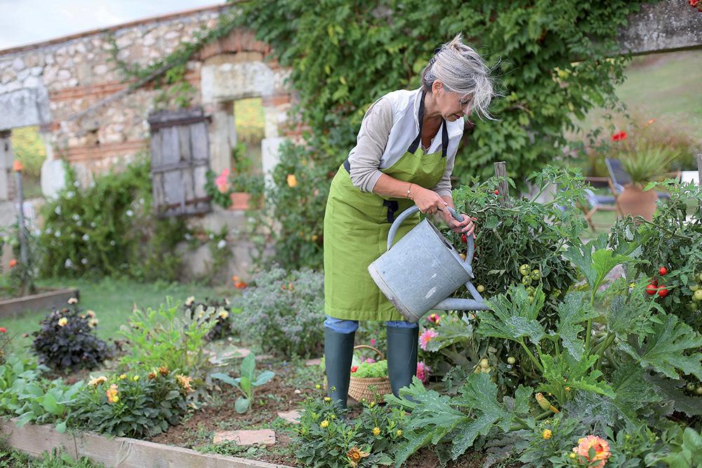 Bioochrana záhrady svojpomocne: Týchto 30 rastlín vám pomôže