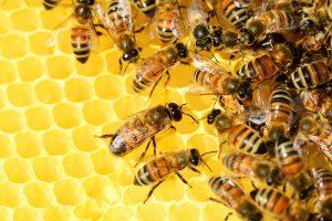 Včely si musíme chrániť, pomáhajú nám nielen v záhrade