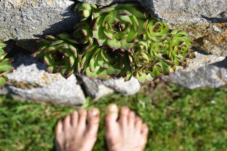 Skalné ruže a nohy fotografa