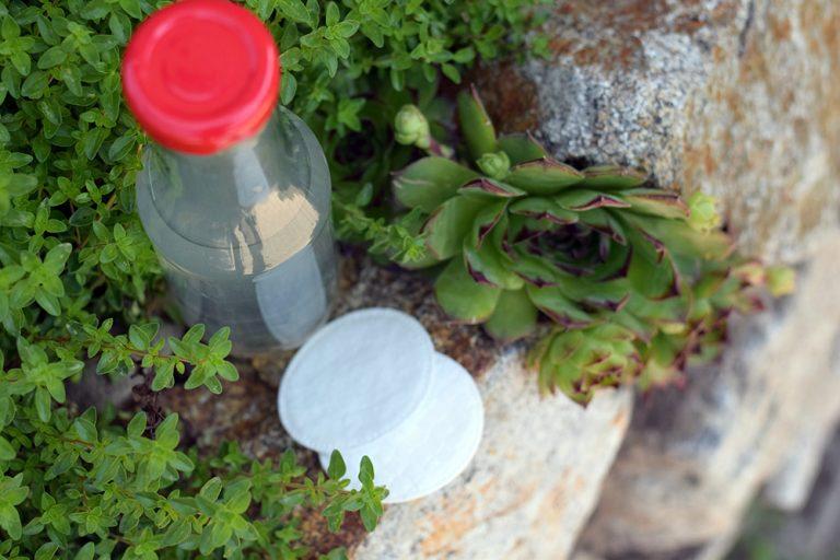 Pleťová voda zo skalnej ruže v záhone so skalničkami